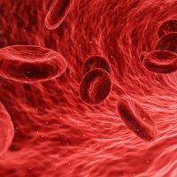 ¿Existe una relación entre el tipo de sangre y la alimentación?